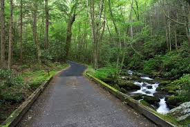 a scenic drive in the smokies you have to make time for roaring fork motor nature trail