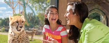 busch gardens tickets. Busch Gardens Tampa Serengeti Safari Cheetah Viewing Tickets At Bestoforlando.com - Slider