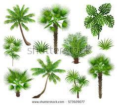 fan palm trees. tropical plants (coconut palm, monstera, fan rhapis). set of palm trees l