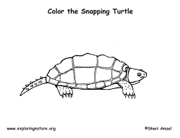 Small Picture Turtle Snapping Coloring Page Snapping turtle Preschool