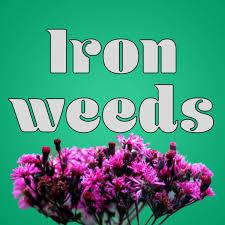 Ironweeds