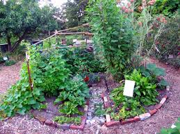 Permaculture Garden Design Ideas Keyhole Permaculture Garden Design Ideas Stunning Permaculture