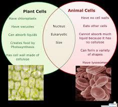 Venn Diagram On Plant And Animal Cells Dna Vs Rna Venn Diagram Plant Vs Animal Cells Venn Diagram For