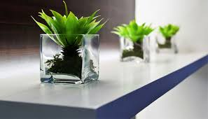 plants for windowless office. many companies adopt green and fresh plants so that they can provide you the refreshment joy while working at your office, today we are going to check for windowless office