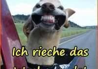 70 Gut Bilder Of Lustige Bilder Und Sprüche Zum Wochenende Utconcerts