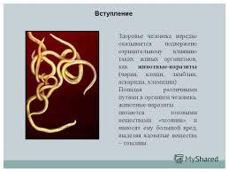 Паразиты в организме человека реферат на тему организмы паразиты Реферат на тему организмы паразиты