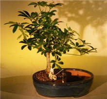 small plants for office. Picture Of A Good Indoor Office Plants Small For