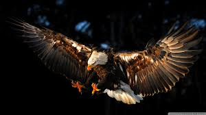 cool hunting backgrounds. 168+ Best HD Hawk Wallpapers, 3380140 1920x1080 Cool Hunting Backgrounds