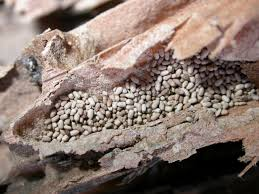 termites in furniture solutions