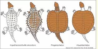 Difference Between Amphibians And Reptiles Venn Diagram Is A Turtle A Reptile Or Amphibian Quora