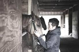 Image result for horse job, groom