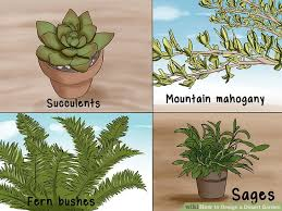 Small Picture How to Design a Desert Garden with Pictures wikiHow