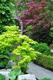 Small Picture 63 best Japanese Maple images on Pinterest Acer palmatum