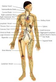 Positive Health Online Article Manual Lymphatic Drainage