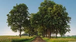 Rural Road, Green Trees, Landscape ...