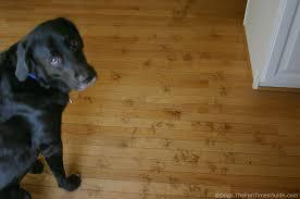 tenor dog left muddy paw prints on hardwood
