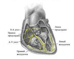 Сердце  ref 3 274845155 92263 coolpic