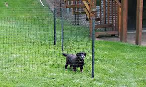 temporary dog fence small