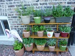 pallet herb garden is the solution for limited space
