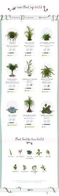 Indoor Plants Safe For Pets (And The Toxic Ones You Should Avoid)  Infographic
