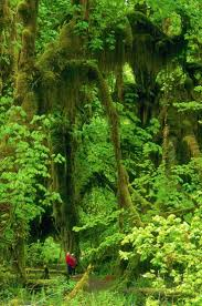25 best images about bosque tropical on pinterest