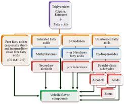 Cheese Flavor Chart Cheese Flavor An Overview Sciencedirect Topics