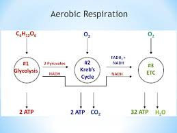 Energy Photosynthesis Cellular Respiration Ppt Video