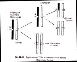 essay on mutation top essays on mutation replication of dna unusual base pairing