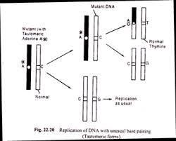 essay on mutation top essays on mutation replication of dna unusual base pairing