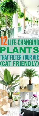 12 Life-Changing Plants That Filter Your Air - Safe For Cats Too