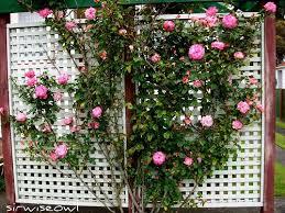 Pot Trellis Decorative Plants Pots Climbing Plant Support Garden HeartClimbing Plant Trellis