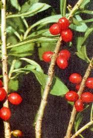 лечение растениями книга нины георгиевны ковалевой