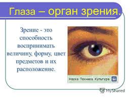 Презентация на тему Урок Окружающий мир класс Глаза орган  3 Глаза орган зрения