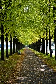 Image result for long path