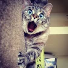 Image result for shocked kitty
