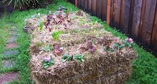 gardening made easy with straw bales