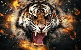 White Tiger Fire Tiger Wallpaper ...