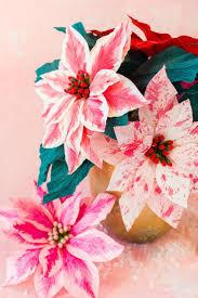 Papier Weihnachtsstern Blumen Blumen Papier