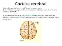 sistema nervioso ppt video