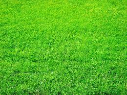 green grass field. Bright Green Grass Great As A Background, Stock Photo Field