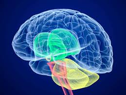 Cerebral Palsy Symptoms Causes And Treatments