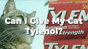 Can I Give My Cat Tylenol Pet Consider