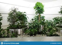 Interior Design Plants Inside House Modern Interior Design With Indoor Plants Stock Image