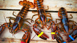 lobsters were once only fed to poor people and prisoners but as david foster wallace s famous essay consider the lobster illustrated throughout colonial era america
