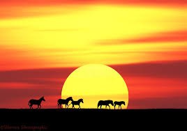 Image result for sunset pictures