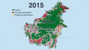 The Story Of Indonesias Disappearing Forests In Four Charts