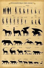 animal sizes chart panamindorah size chart 1 by jeffmcdowalldesign on deviantart