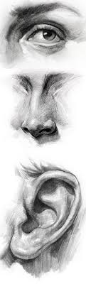 eyebrow shading drawing. how to draw a nose (front view) rapidfireart tutorials eyes lips shading eyebrow drawing y