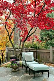 the 18 best trees for small gardens