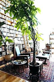tall houseplants safe for dogs large indoor trees low light best plants home and offices regarding large house plants